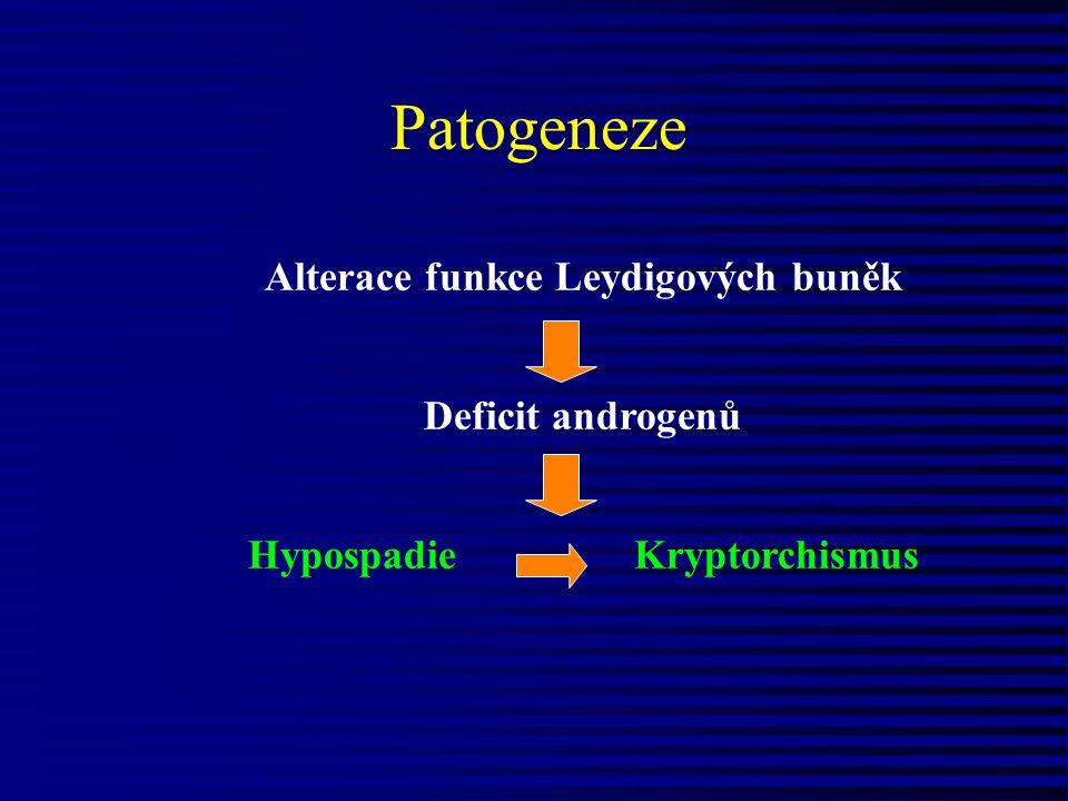 Patogeneze Alterace funkce Leydigových buněk Deficit androgenů Hypospadie Kryptorchismus