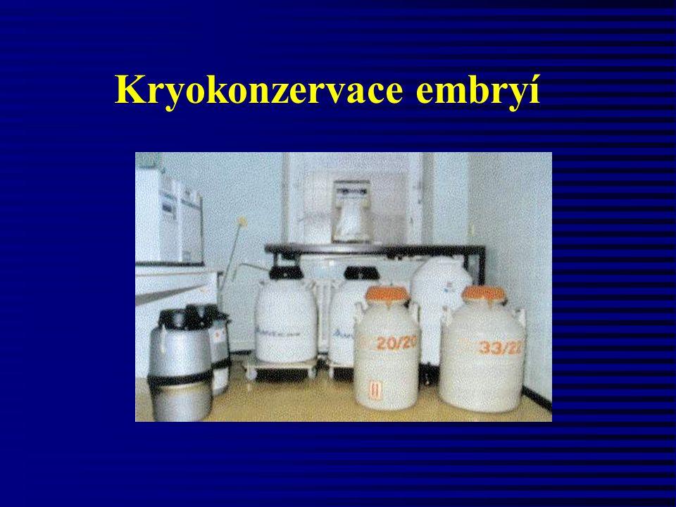 Kryokonzervace embryí