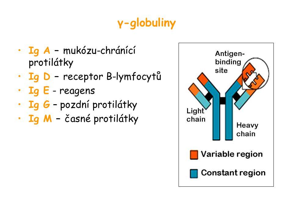 γ-globuliny Ig A – mukózu-chránící protilátky Ig D – receptor B-lymfocytů Ig E - reagens Ig G – pozdní protilátky Ig M – časné protilátky