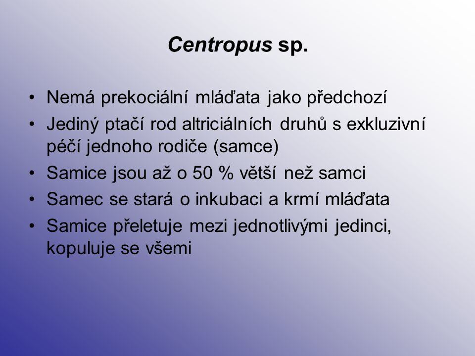 Centropus sp. Nemá prekociální mláďata jako předchozí Jediný ptačí rod altriciálních druhů s exkluzivní péčí jednoho rodiče (samce) Samice jsou až o 5