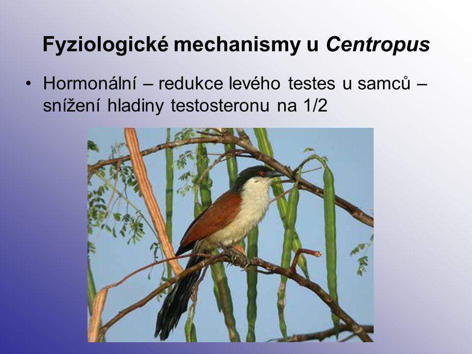 Fyziologické mechanismy u Centropus Hormonální – redukce levého testes u samců – snížení hladiny testosteronu na 1/2