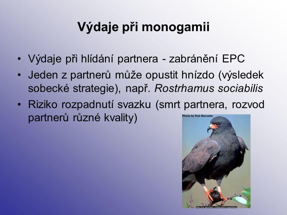 Výdaje při monogamii Výdaje při hlídání partnera - zabránění EPC Jeden z partnerů může opustit hnízdo (výsledek sobecké strategie), např. Rostrhamus s