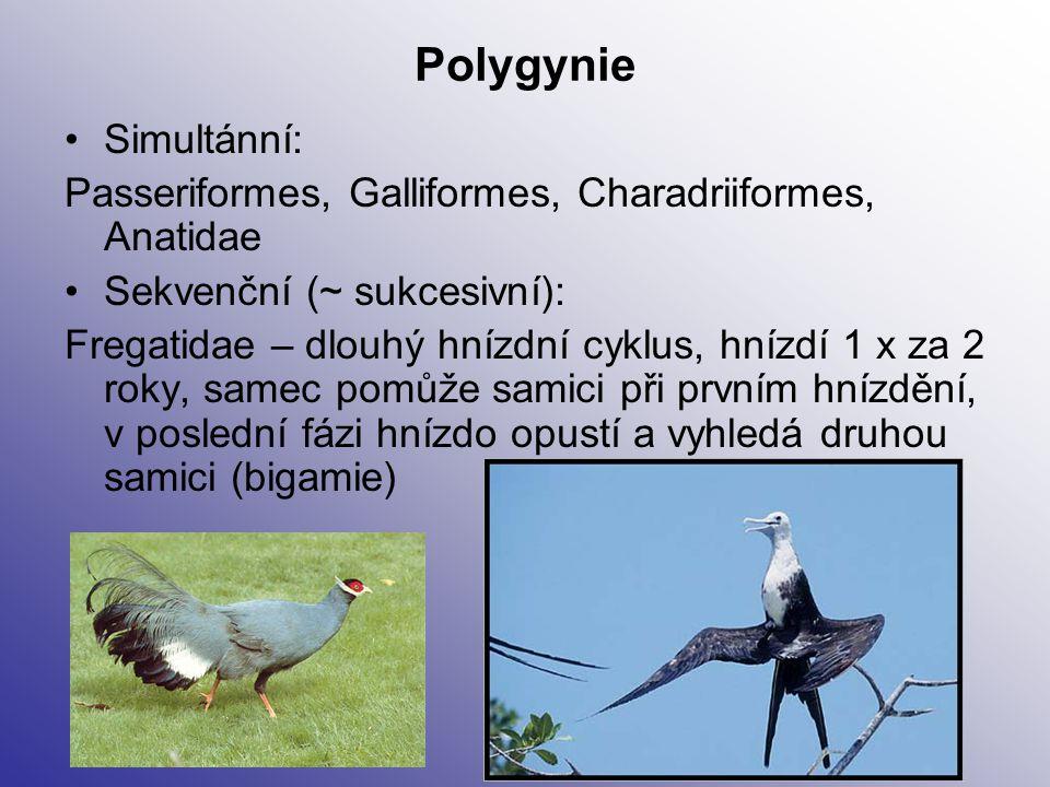 Polygynie Simultánní: Passeriformes, Galliformes, Charadriiformes, Anatidae Sekvenční (~ sukcesivní): Fregatidae – dlouhý hnízdní cyklus, hnízdí 1 x z