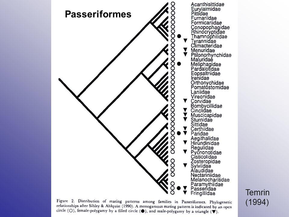 Buteo galapagoensis Skupina nepříbuzných samců a samice Skupina je teritoriální, společně hájí velké teritorium Uvnitř skupiny nepříbuzných samců není kompetice o samici (možnost kompetice spermií) Produkce skupiny je menší než velikost skupiny (1-2 mláďata) U větších skupin se někteří samci v jednom roce neuplatní vůbec Během doby se pravděpodobně vystřídají, dlouhodobá strategie