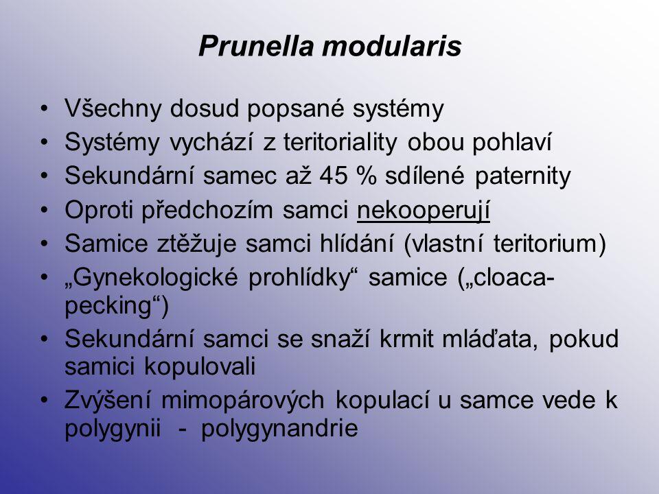 Prunella modularis Všechny dosud popsané systémy Systémy vychází z teritoriality obou pohlaví Sekundární samec až 45 % sdílené paternity Oproti předch