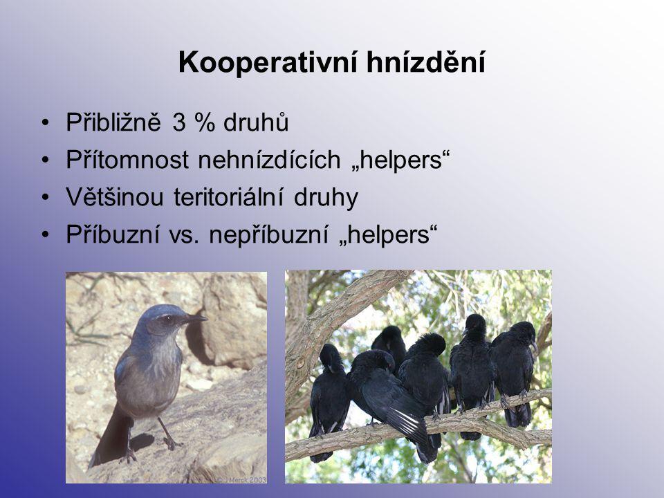 """Kooperativní hnízdění Přibližně 3 % druhů Přítomnost nehnízdících """"helpers"""" Většinou teritoriální druhy Příbuzní vs. nepříbuzní """"helpers"""""""