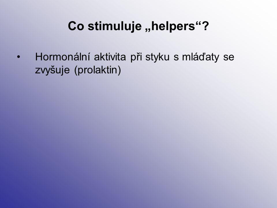 """Co stimuluje """"helpers""""? Hormonální aktivita při styku s mláďaty se zvyšuje (prolaktin)"""