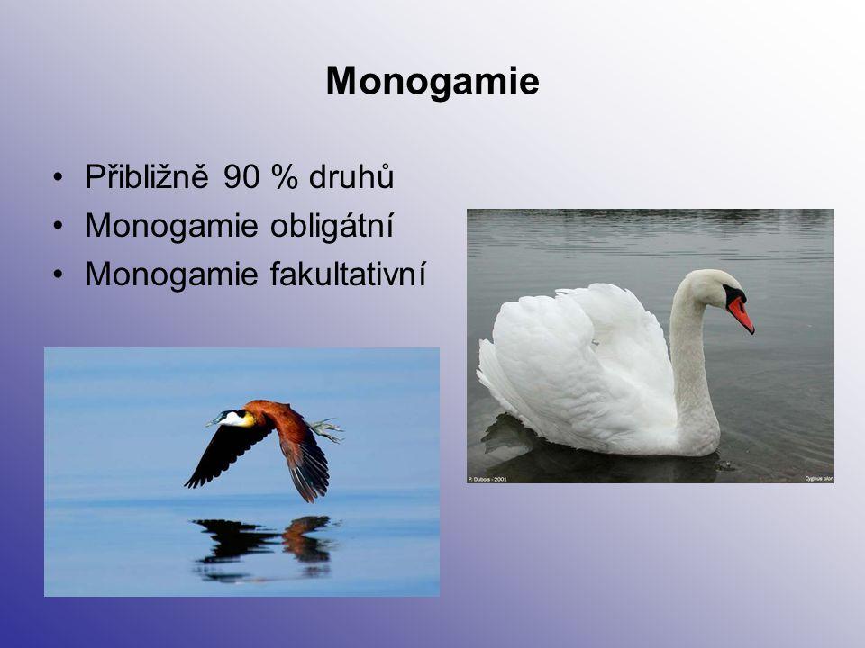 Monogamie - obligátní Samec i samice se podílí při stavbě hnízda (inkubaci), častá separace rodičovské péče (př.