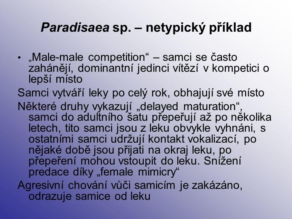 """Paradisaea sp. – netypický příklad """" Male-male competition"""" – samci se často zahánějí, dominantní jedinci vítězí v kompetici o lepší místo Samci vytvá"""