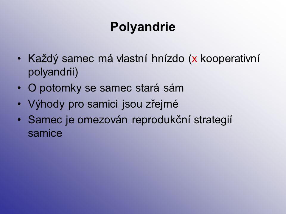 Polyandrie Každý samec má vlastní hnízdo (x kooperativní polyandrii) O potomky se samec stará sám Výhody pro samici jsou zřejmé Samec je omezován repr