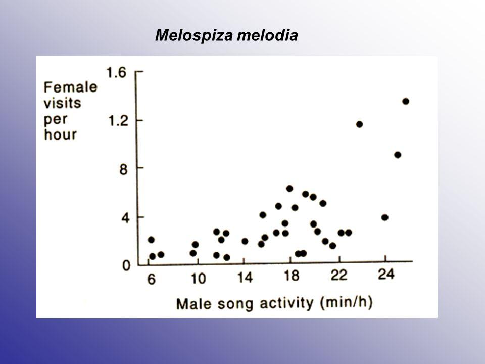 """Mechanismy udržení monogamie Synchronizace načasování hnízdění v populaci Stálý poměr pohlaví (dostatek partnerů) Separace rodičovské péče (jeden jedinec k úspěšnému vyhnízdění nestačí) Hormonální synchronizace uvnitř páru (malá pravděpodobnost, že bude samec synchronizován s jinou samicí) """"Svatební dary samici – výběr samce Hlídání partnera (""""mate-guarding ) Agresivita uvnitř jednoho pohlaví"""