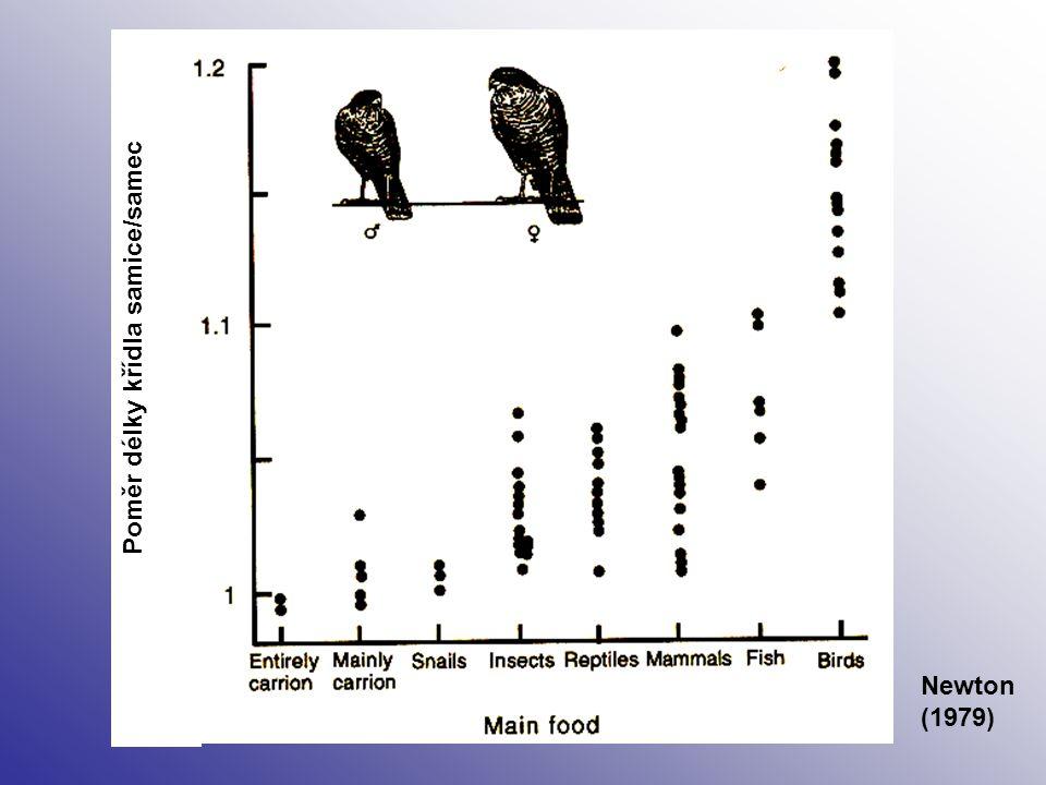 Poměr délky křídla samice/samec Newton (1979)