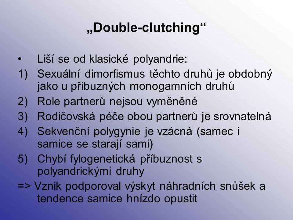 """""""Double-clutching"""" Liší se od klasické polyandrie: 1)Sexuální dimorfismus těchto druhů je obdobný jako u příbuzných monogamních druhů 2)Role partnerů"""