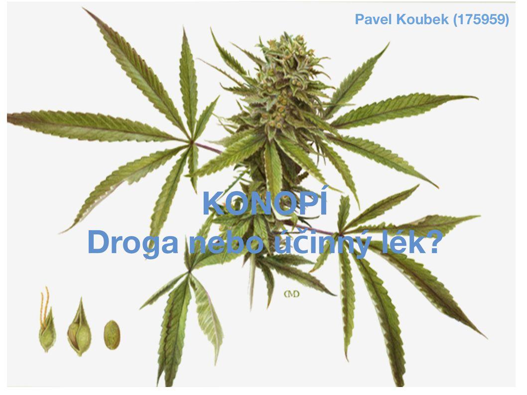 Úvod Konopí seté/indické (Cannabis sativa/indica) Jednoletá dvoudomá bylina původem ze střední Asie, dorůstá 1 – 6 m Účinná látka – THC (tetrahydrocannabinol) ve větším množství pouze v samičích rostlinách, zejména v květech (pryskyřice) Kanabinoidové receptory v mozku => předkulturní, dlouhodobý vztah mezi člověkem a konopím Využití v zemědělství – vlákno, olej, papír, textil Využití v lékařství