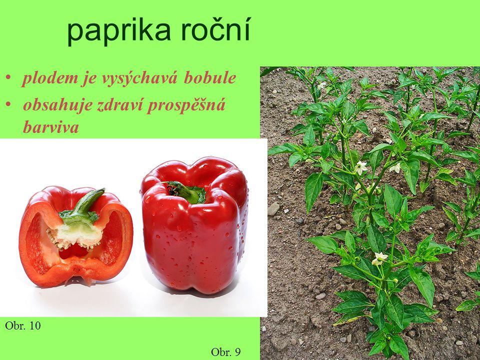 paprika roční plodem je vysýchavá bobule obsahuje zdraví prospěšná barviva Obr. 9 Obr. 10