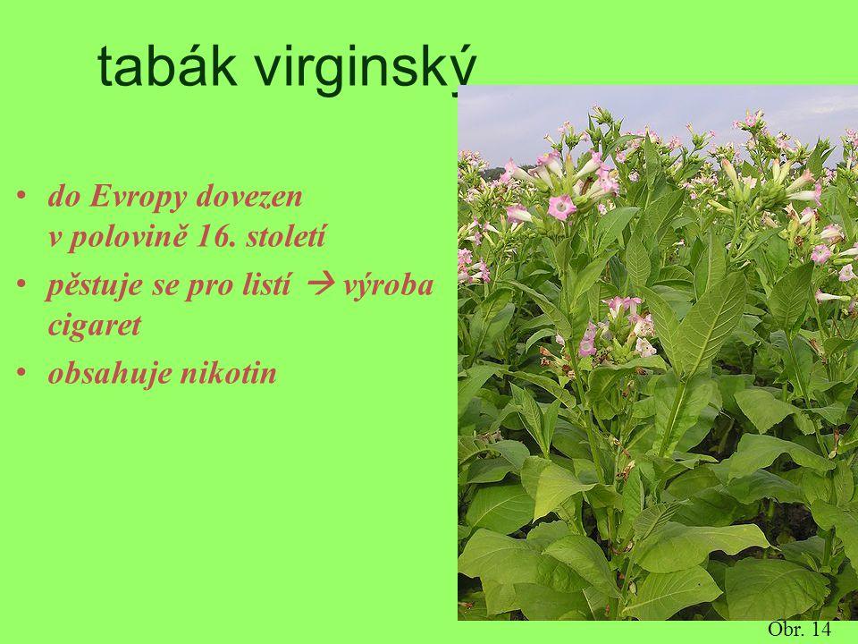 tabák virginský do Evropy dovezen v polovině 16. století pěstuje se pro listí  výroba cigaret obsahuje nikotin Obr. 14