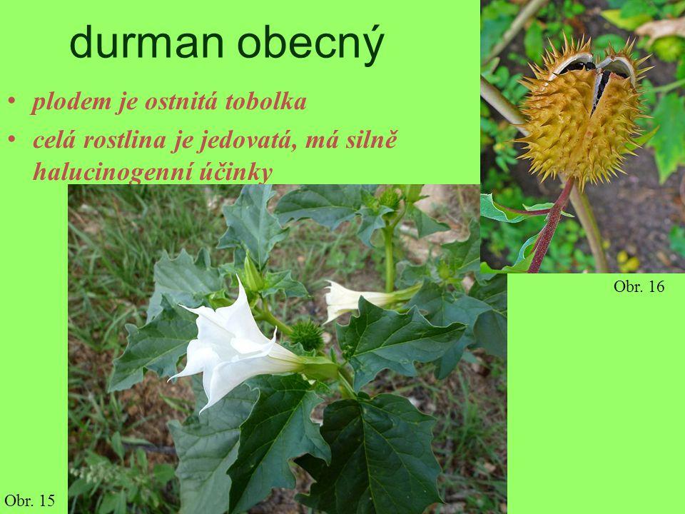 durman obecný plodem je ostnitá tobolka celá rostlina je jedovatá, má silně halucinogenní účinky Obr. 15 Obr. 16