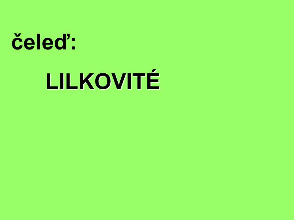 čeleď: LILKOVITÉ
