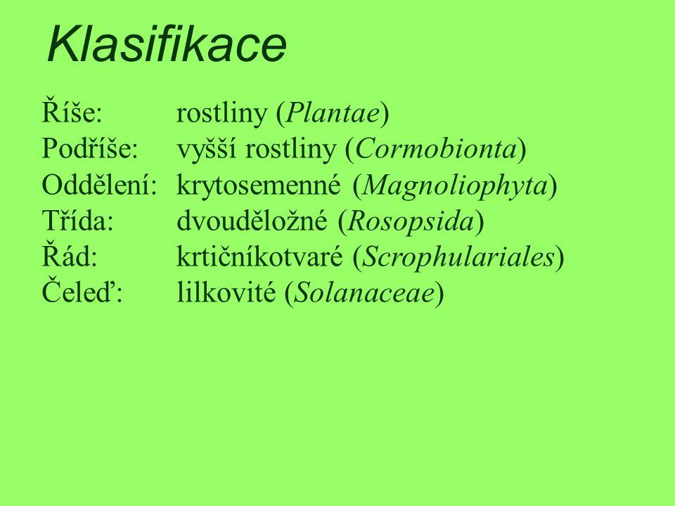 Klasifikace Říše:rostliny (Plantae) Podříše:vyšší rostliny (Cormobionta) Oddělení:krytosemenné (Magnoliophyta) Třída:dvouděložné (Rosopsida) Řád:krtič