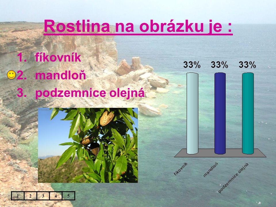 Rostlina na obrázku je : 1.fíkovník 2.mandloň 3.podzemnice olejná 12345