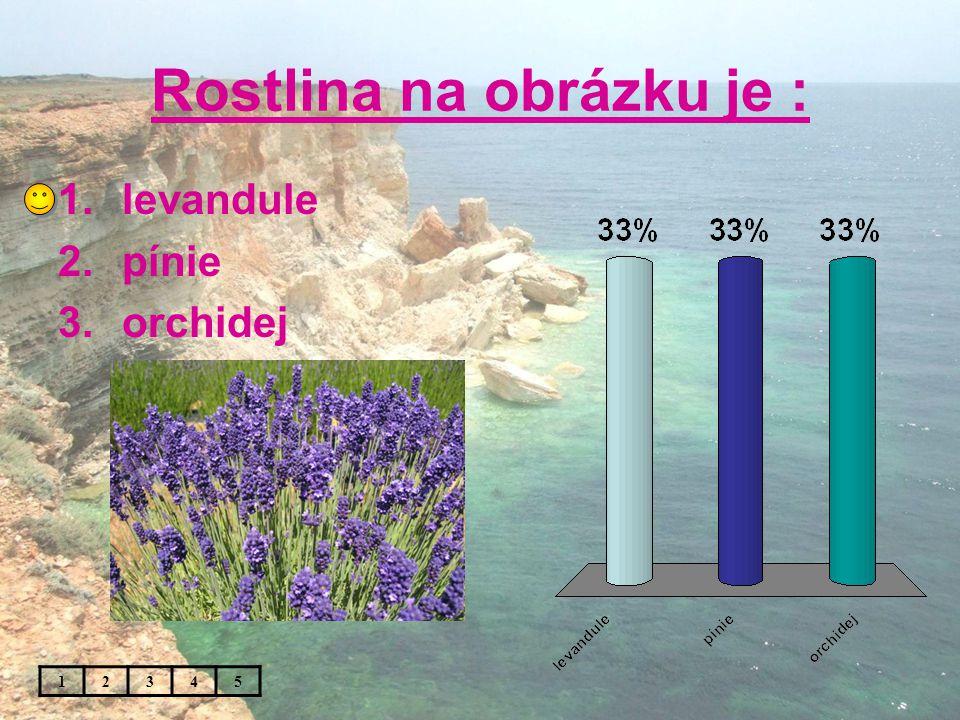 Rostlina na obrázku je : 1.levandule 2.pínie 3.orchidej 12345