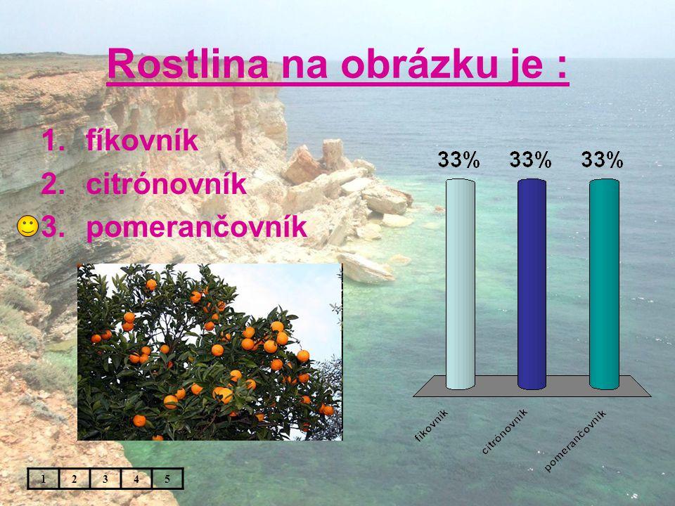 Rostlina na obrázku je : 1.fíkovník 2.citrónovník 3.pomerančovník 12345