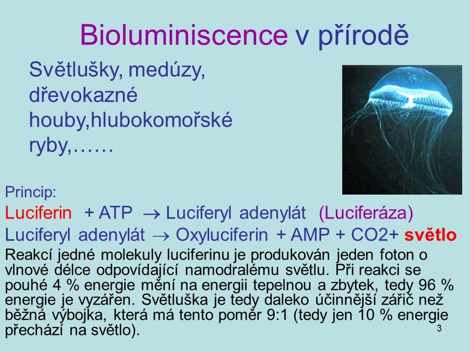 3 Bioluminiscence v přírodě Světlušky, medúzy, dřevokazné houby,hlubokomořské ryby,…… Princip: Luciferin + ATP  Luciferyl adenylát (Luciferáza) Lucif