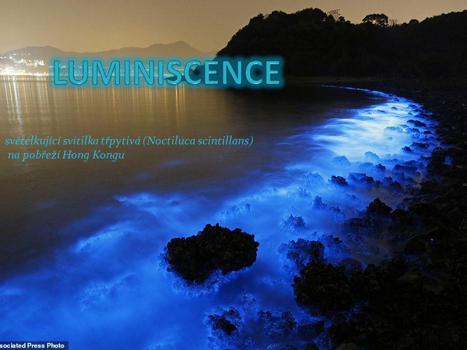 světélkující svítilka třpytivá (Noctiluca scintillans) na pobřeží Hong Kongu