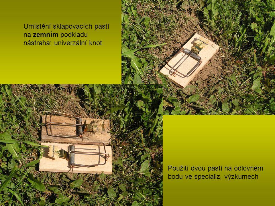 Umístění sklapovacích pastí na zemním podkladu nástraha: univerzální knot Použití dvou pastí na odlovném bodu ve specializ. výzkumech