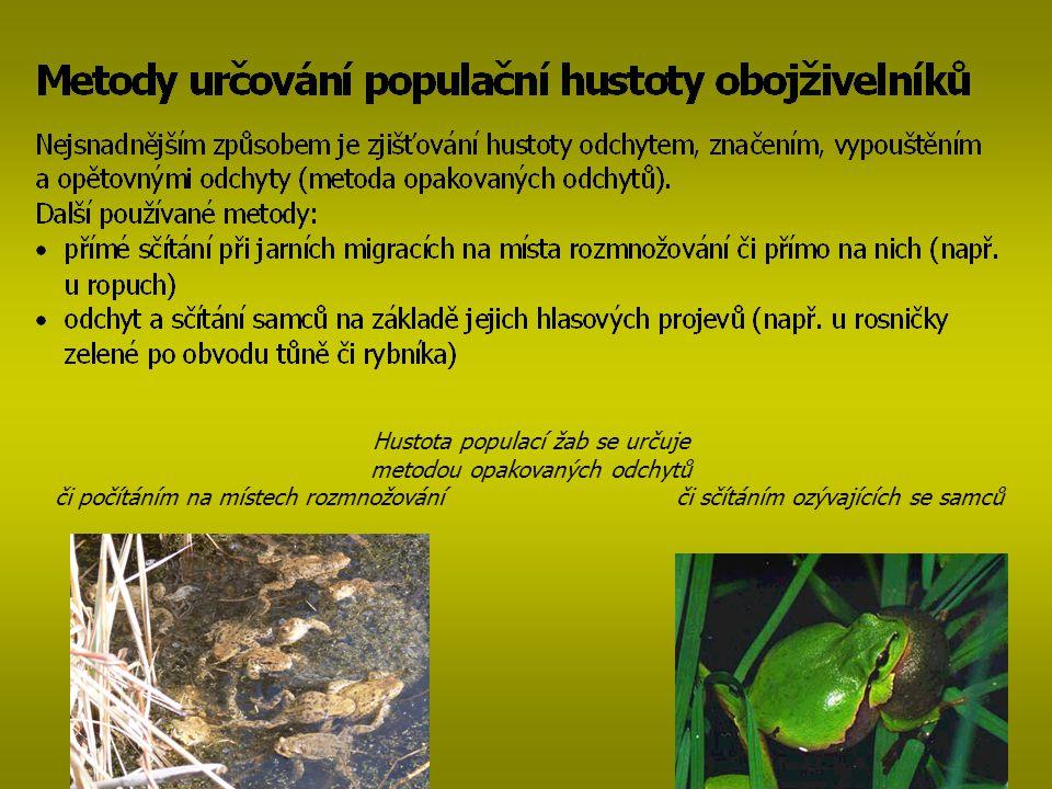 Hustota populací žab se určuje metodou opakovaných odchytů či počítáním na místech rozmnožování či sčítáním ozývajících se samců