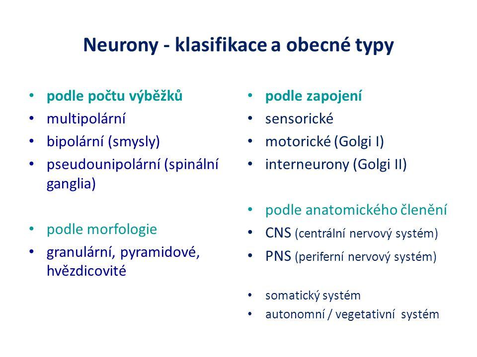 Neurony - klasifikace a obecné typy podle počtu výběžků multipolární bipolární (smysly) pseudounipolární (spinální ganglia) podle morfologie granulární, pyramidové, hvězdicovité podle zapojení sensorické motorické (Golgi I) interneurony (Golgi II) podle anatomického členění CNS (centrální nervový systém) PNS (periferní nervový systém) somatický systém autonomní / vegetativní systém