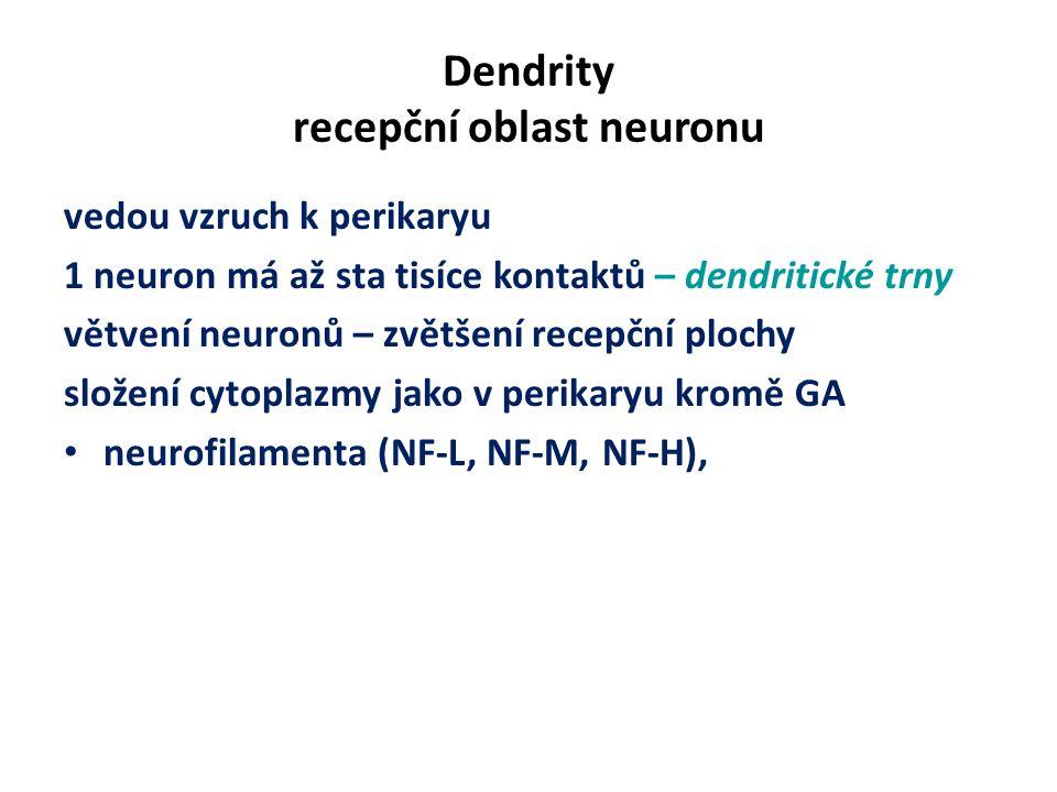 Dendrity recepční oblast neuronu vedou vzruch k perikaryu 1 neuron má až sta tisíce kontaktů – dendritické trny větvení neuronů – zvětšení recepční plochy složení cytoplazmy jako v perikaryu kromě GA neurofilamenta (NF-L, NF-M, NF-H),