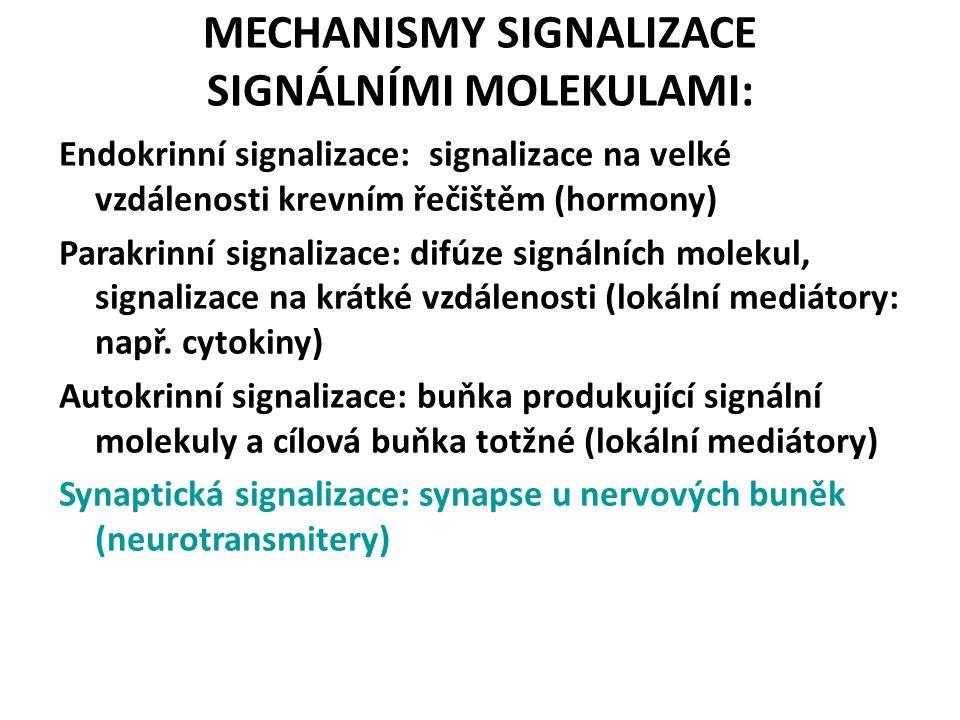 MECHANISMY SIGNALIZACE SIGNÁLNÍMI MOLEKULAMI: Endokrinní signalizace: signalizace na velké vzdálenosti krevním řečištěm (hormony) Parakrinní signalizace: difúze signálních molekul, signalizace na krátké vzdálenosti (lokální mediátory: např.