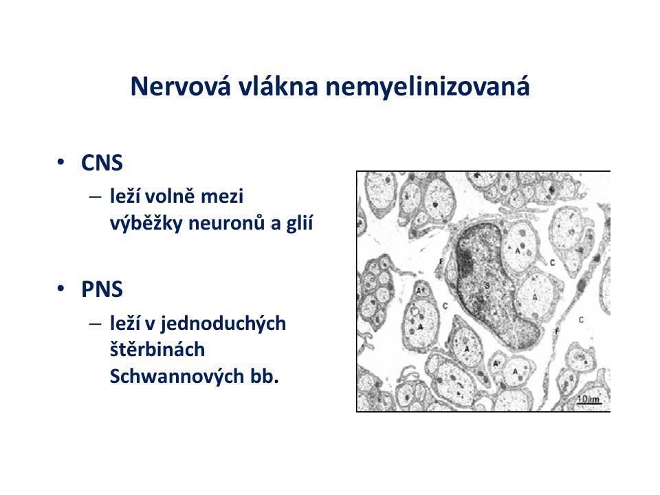 Nervová vlákna nemyelinizovaná CNS – leží volně mezi výběžky neuronů a glií PNS – leží v jednoduchých štěrbinách Schwannových bb.