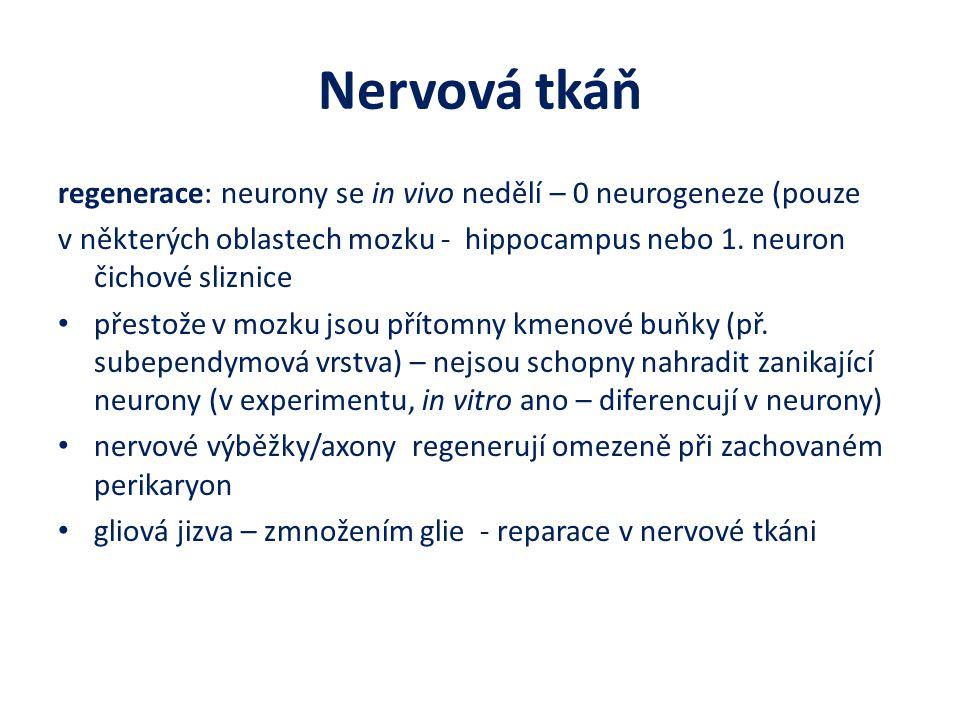 Nervová tkáň regenerace: neurony se in vivo nedělí – 0 neurogeneze (pouze v některých oblastech mozku - hippocampus nebo 1.