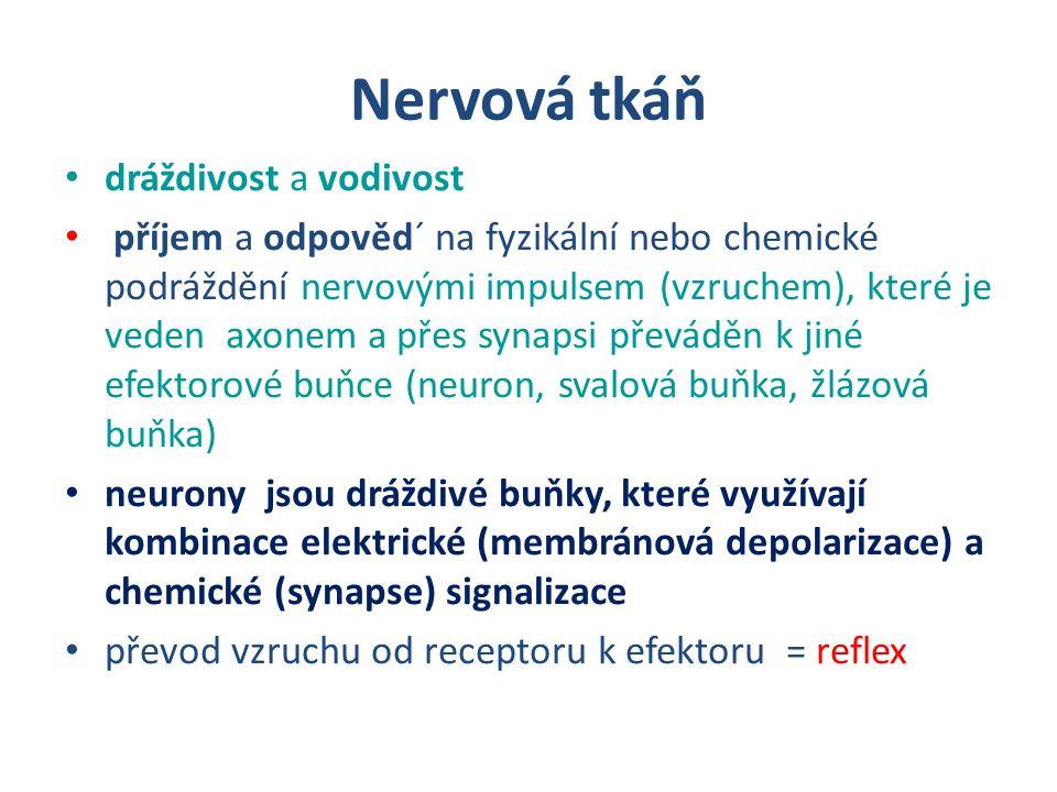 Nervová tkáň dráždivost a vodivost příjem a odpověd´ na fyzikální nebo chemické podráždění nervovými impulsem (vzruchem), které je veden axonem a přes synapsi převáděn k jiné efektorové buňce (neuron, svalová buňka, žlázová buňka) neurony jsou dráždivé buňky, které využívají kombinace elektrické (membránová depolarizace) a chemické (synapse) signalizace převod vzruchu od receptoru k efektoru = reflex