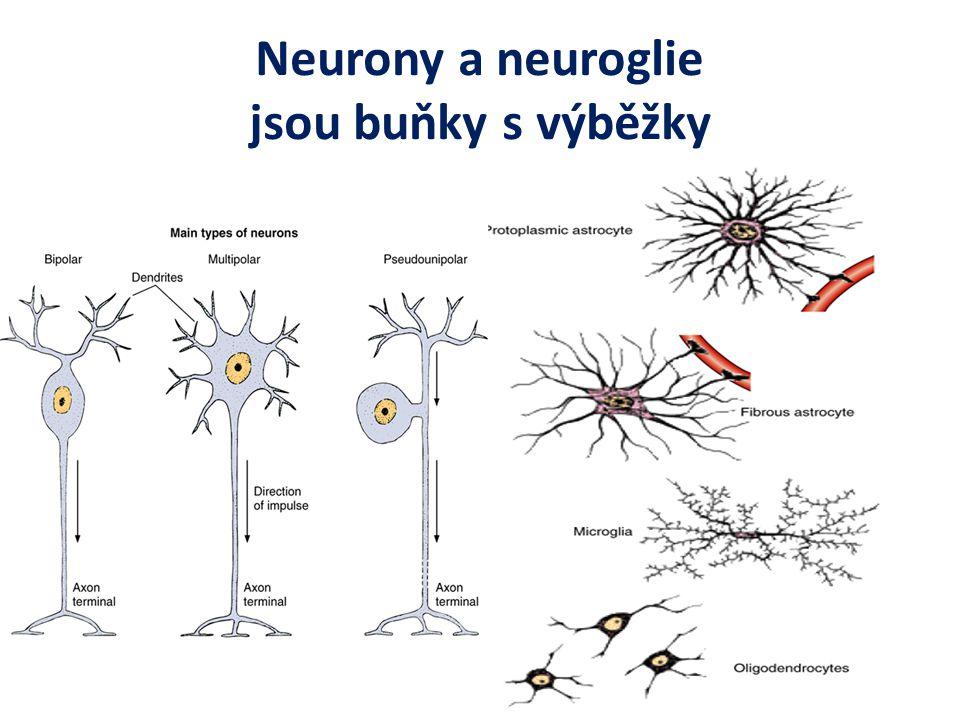 Neurony a neuroglie jsou buňky s výběžky