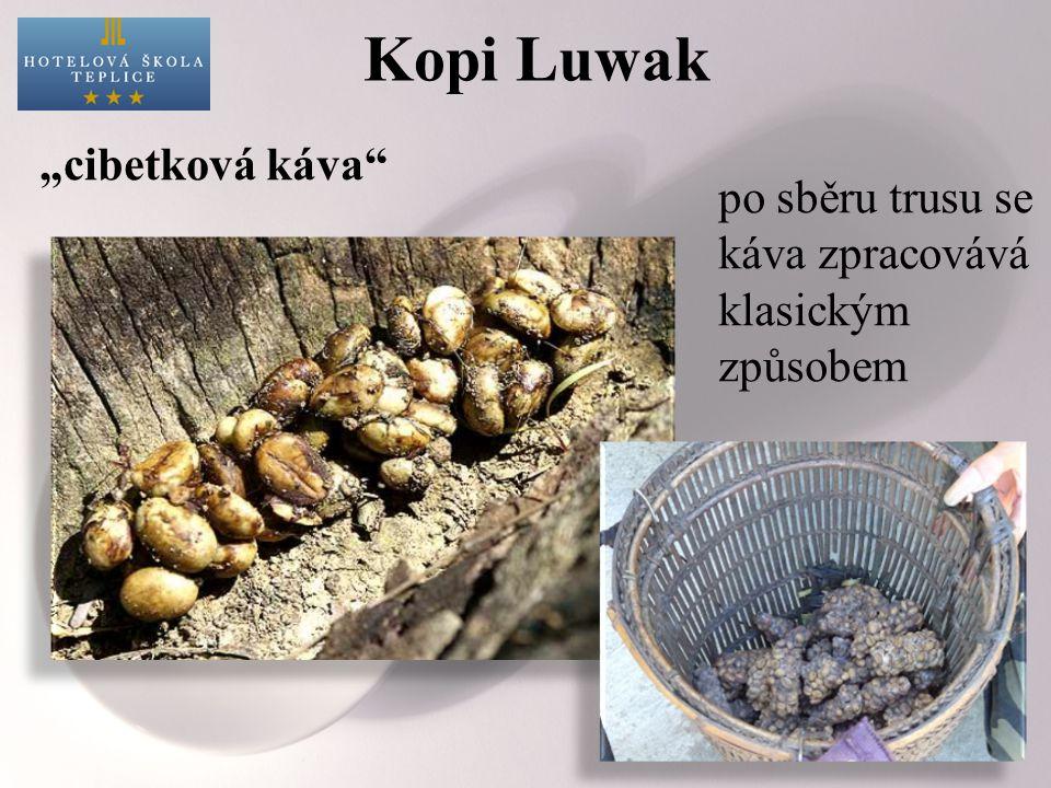 """Kopi Luwak """"cibetková káva po sběru trusu se káva zpracovává klasickým způsobem"""