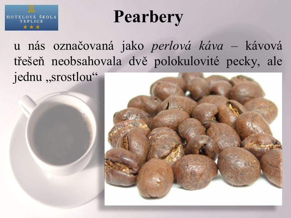 """Pearbery u nás označovaná jako perlová káva – kávová třešeň neobsahovala dvě polokulovité pecky, ale jednu """"srostlou"""
