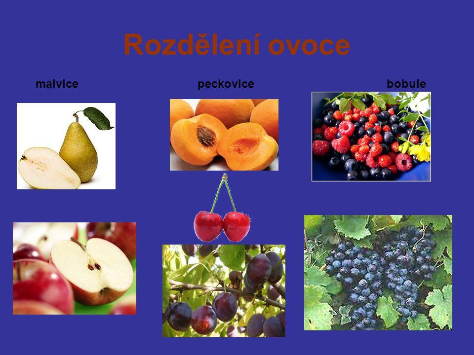 Rozdělení ovoce malvice peckovice bobule