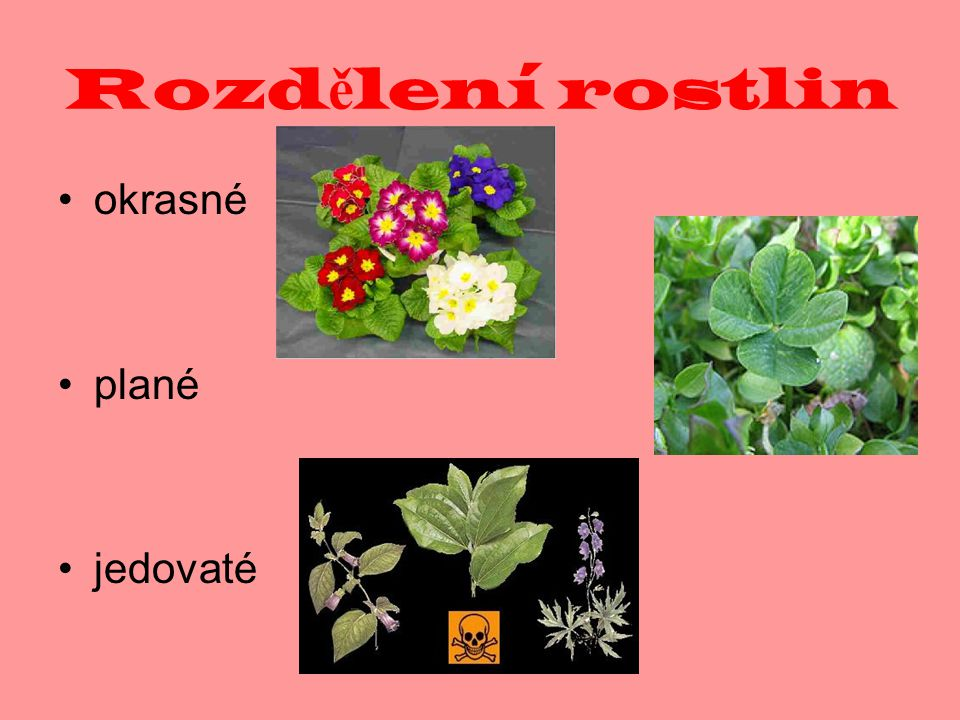 Rozd ě lení rostlin léčivé chráněné