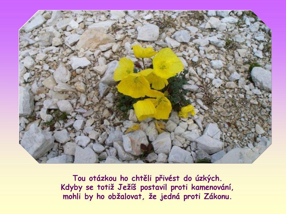 """Ježíš učil v chrámě, když k němu učitelé Zákona a farizeové přivedli ženu přistiženou při cizoložství. Řekli mu: """"… Mojžíš nám v Zákoně nařídil takové"""