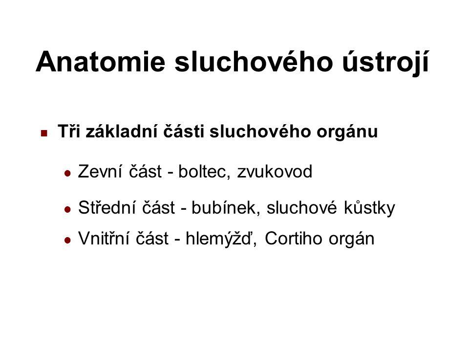 Sluchový orgán