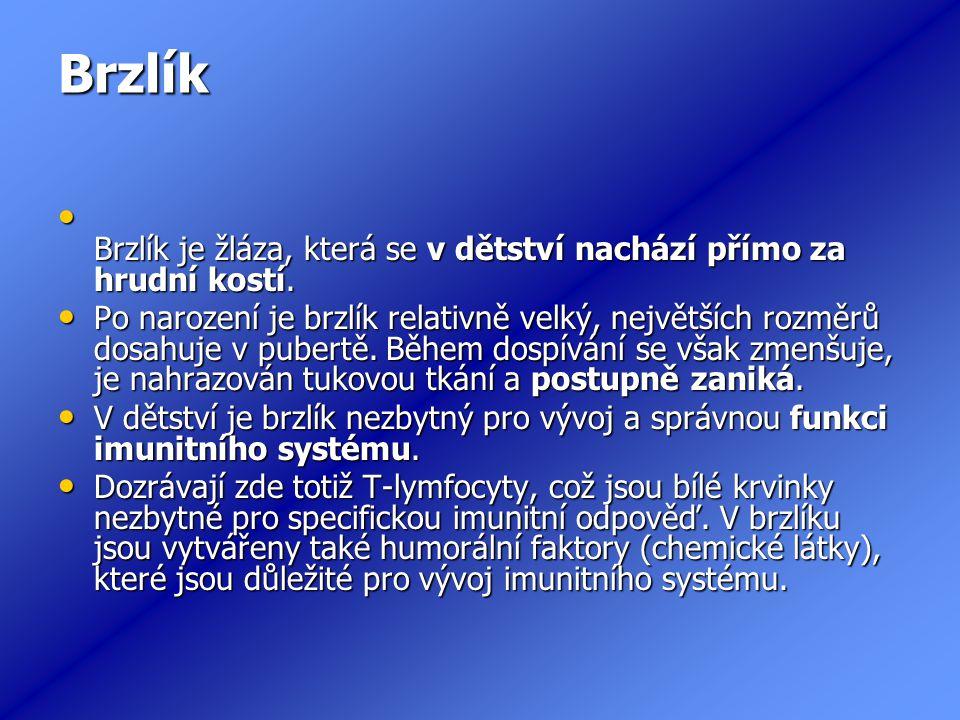 Brzlík Brzlík je žláza, která se v dětství nachází přímo za hrudní kostí.