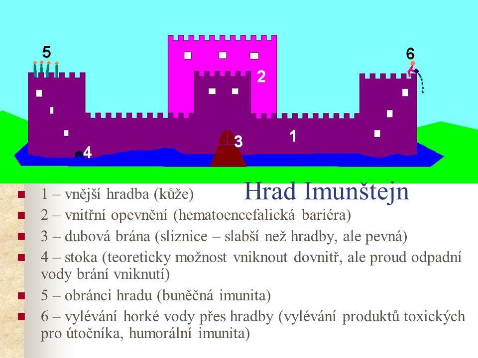 1 – vnější hradba (kůže) 2 – vnitřní opevnění (hematoencefalická bariéra) 3 – dubová brána (sliznice – slabší než hradby, ale pevná) 4 – stoka (teoret