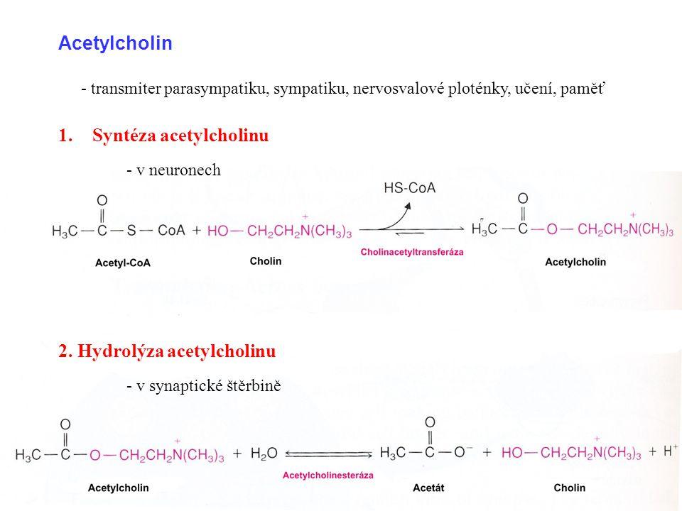 Acetylcholin 1.Syntéza acetylcholinu - v neuronech 2. Hydrolýza acetylcholinu - v synaptické štěrbině - transmiter parasympatiku, sympatiku, nervosval