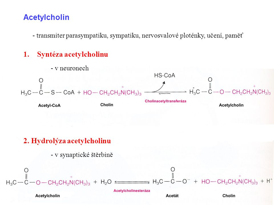 Biogenní aminy:  dekarboxylace aminokyselin  součástí biomolekul, neurotransmitery AminokyselinaAminFunkce SerinEthanolaminFosfolipidy CysteinThyoethanolaminKoenzym A ThreoninAminopropanolVitamin B 12 Aspartátβ-alaninKoenzym A Glutamátγ-aminobutyrátNeurotransmiter (GABA) HistidinHistaminMediátor, neurotransmiter DopaDopaminNeurotransmiter 5-hydroxytryptofanSerotoninMediátor, neurotransmiter