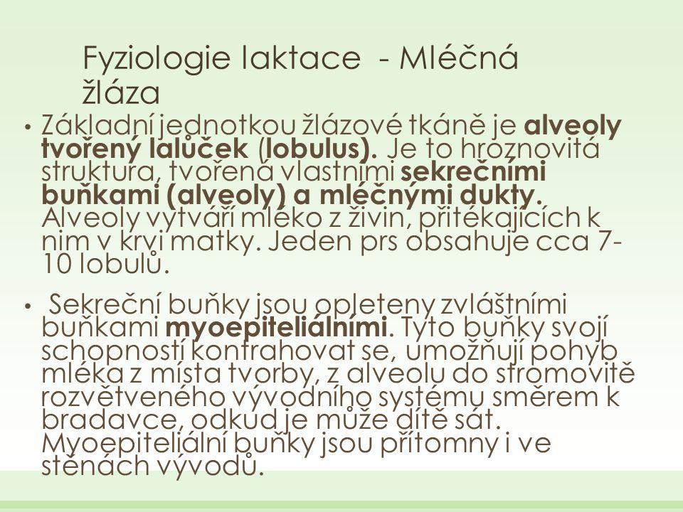 Fyziologie laktace - Mléčná žláza Základní jednotkou žlázové tkáně je alveoly tvořený lalůček ( lobulus).