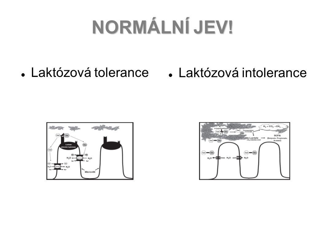 NORMÁLNÍ JEV! Laktózová tolerance Laktózová intolerance