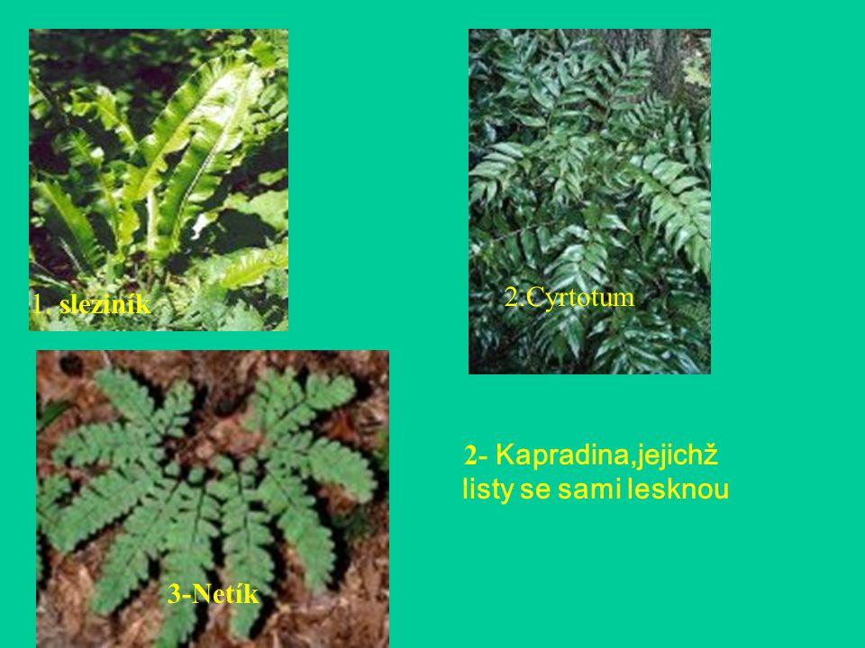 1. sleziník 2.Cyrtotum 2- Kapradina,jejichž listy se sami lesknou 3-Netík